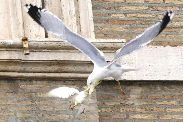 oiseaux-vatican-05