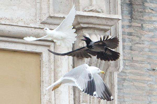 oiseaux-vatican-11
