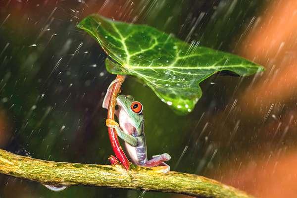 grenouille-parapluie-02