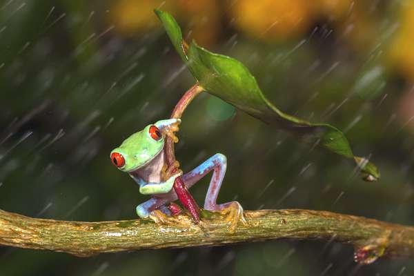 grenouille-parapluie-03