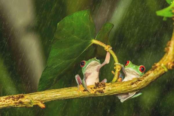 grenouille-parapluie-04