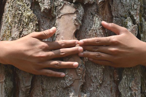 arbres-etreintes-nepal-19